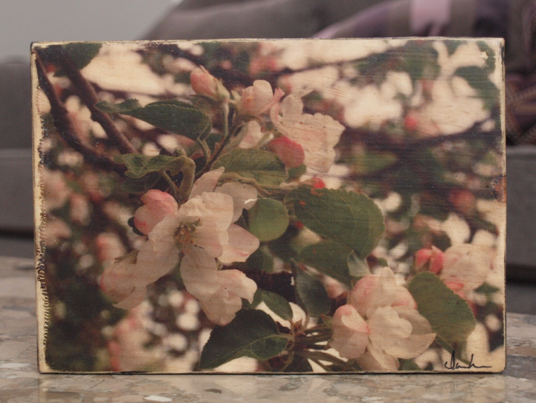 Original Photo Print | Spring Apple Blossoms | Reclaimed Wood