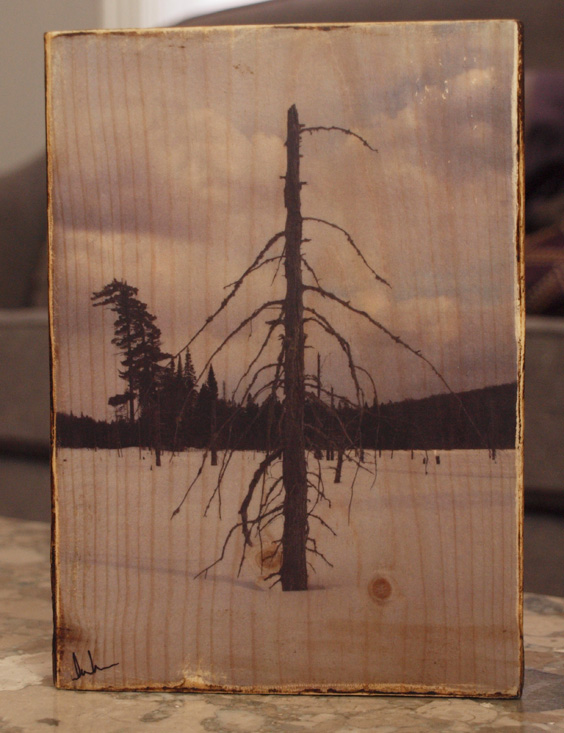 Original Photo Print | Lone Tree in Ice | Reclaimed Wood