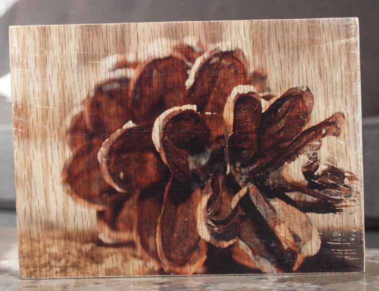 Original Photo Print | Lone Pine Cone | Reclaimed Wood