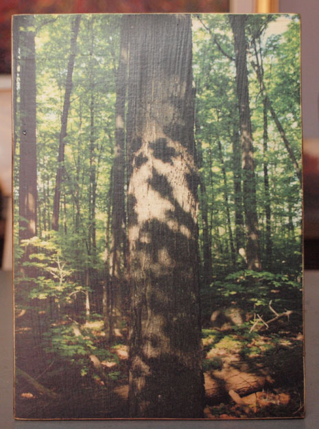 Original Photo Print | Forest Shadows | Reclaimed Wood