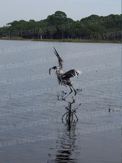 Bird Sculpture in a Lake | Cheap Stock Photo - Click Image to Close