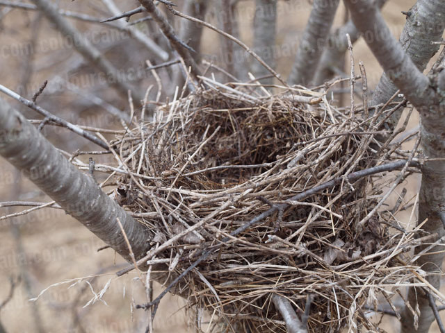 Birds Nest Close Up (2) | Cheap Stock Photo
