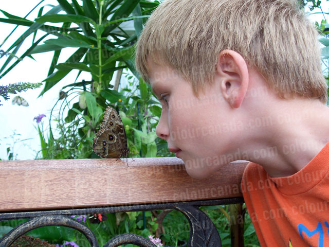 Butterfly and a Boy Nose to Nose | Cheap Stock Photo