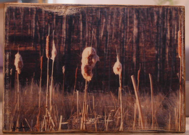 Original Photo Print | Bull Rushes & Cat Tails | Reclaimed Wood