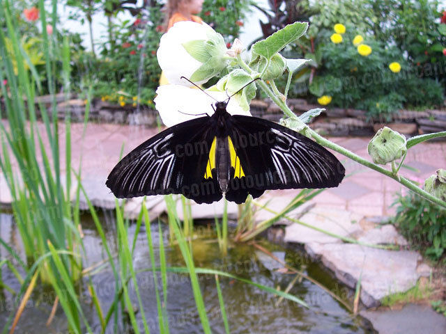 Black and Yellow Butterfly | Cheap Stock Photo