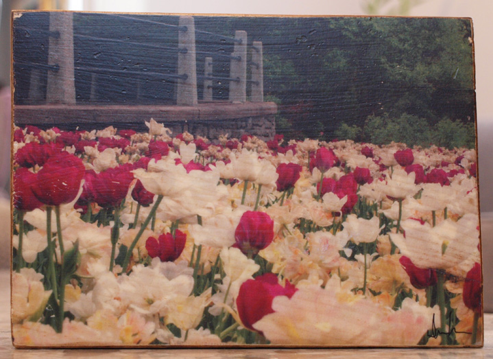 Original Photo Print | Tulip Festival Flowers | Reclaimed Wood