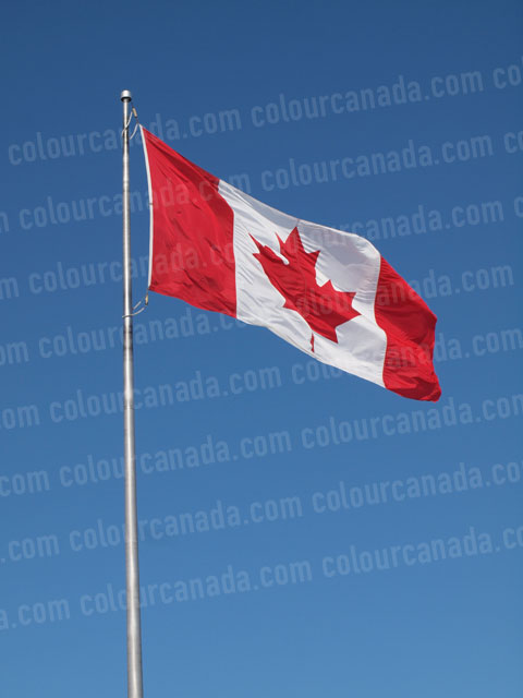 Canadian Flag Portrait | Cheap Stock Photo