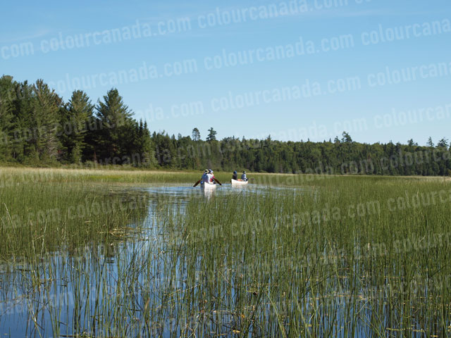 Canoe (2) Weedy River | Cheap Stock Photo