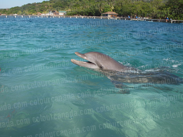 Dolphin Swimming with Mouth Open | Cheap Stock Photo