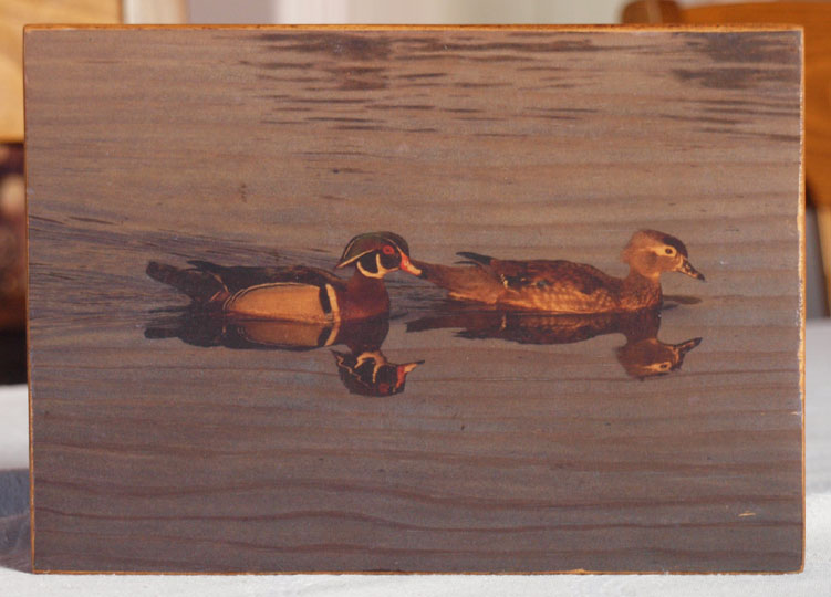 Original Photo Print | Two Wood Ducks | Reclaimed Wood
