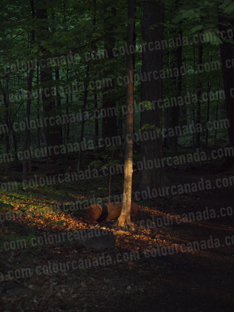 Evening Tree Light Forest | Cheap High Resolution Stock Photo