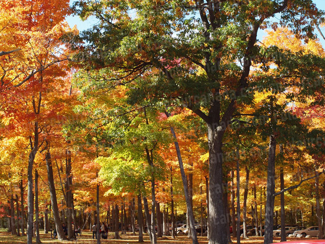 Colourful Autumn Trees | Cheap Stock Photo