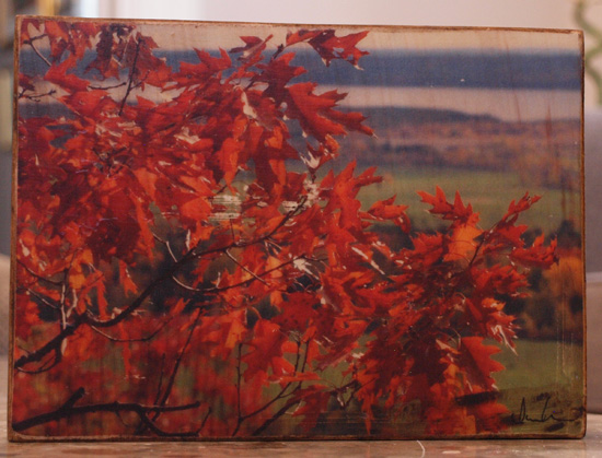 Original Photo Print | Autumn Oak Leaves River | Reclaimed Wood