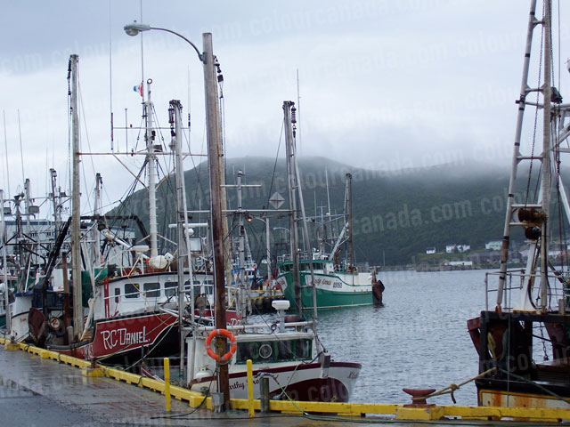 Fishing Boats in Harbour St. Anthony | Cheap Stock Photo