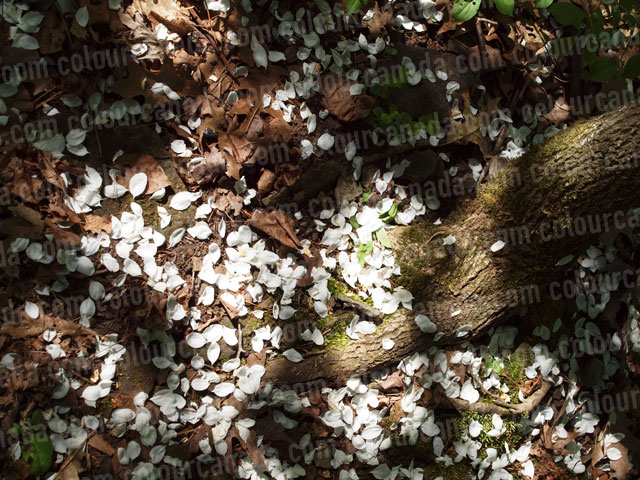 Forest Floor (1) Flower Petals | Cheap Stock Photo