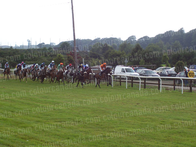 Horse Racing on Grass Track | Cheap Stock Photo