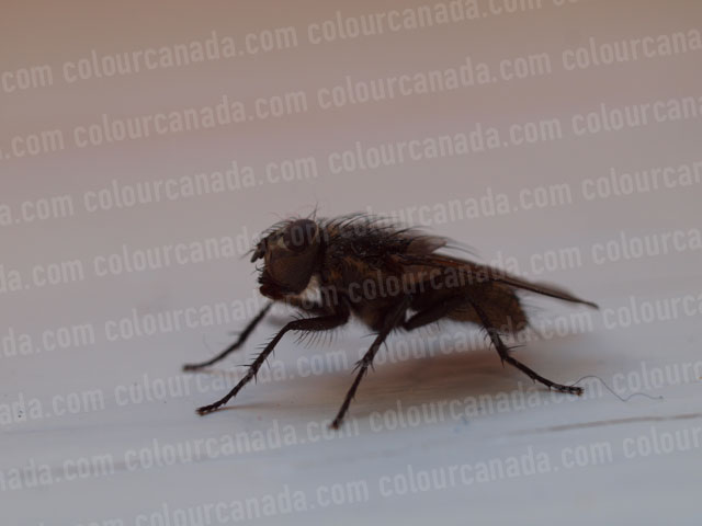 House Fly Close Up | Cheap Stock Photo