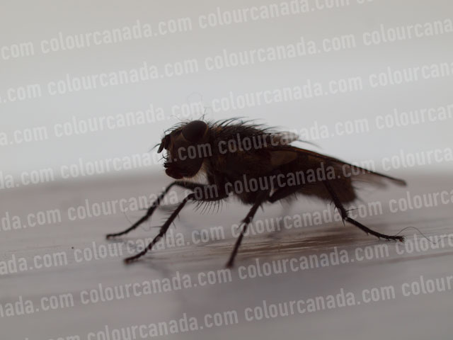 House Fly (2) Close Up | Cheap Stock Photo