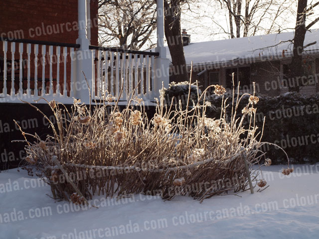 Ice Storm Grass | Cheap Stock Photo