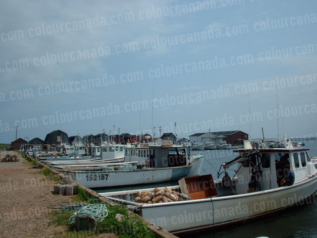 Malpeque Bay Lobster Boats | Cheap Stock Photo - Click Image to Close