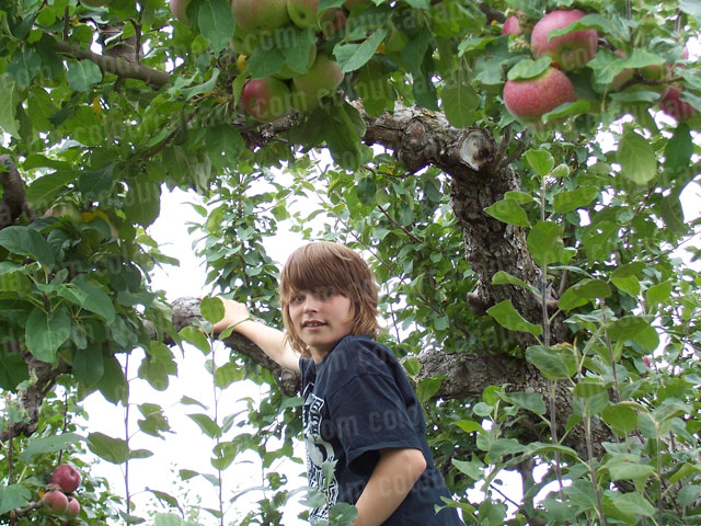 Young Boy Picking Apples | Cheap Stock Photo