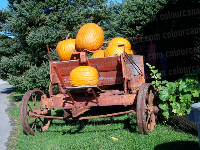 Old Fashioned Cart with Pumpkins | Cheap Stock Photo