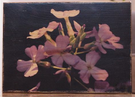 Original Photo Print | Purple Wildflowers | Reclaimed Wood