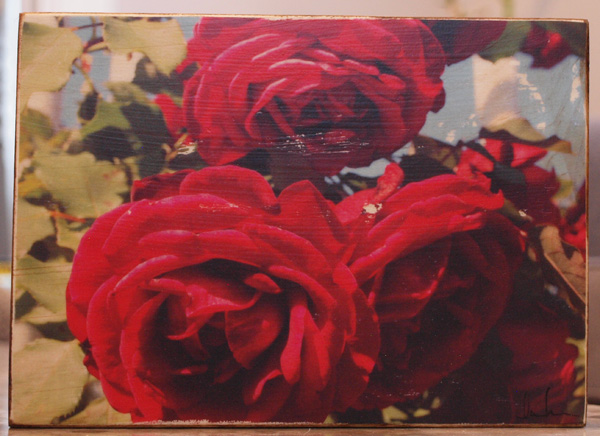 Original Photo Print | Three Red Roses | Reclaimed Wood