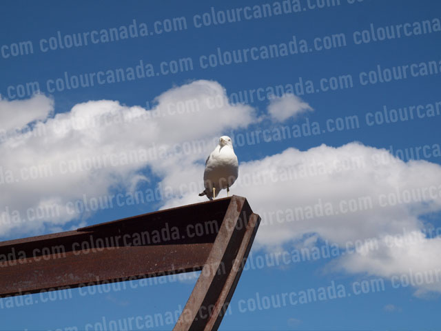 Seagull on Iron Rail (3) | Cheap Stock Photo - Click Image to Close