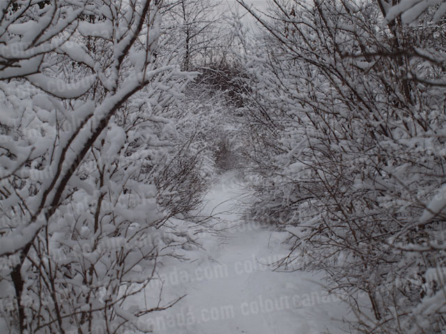 A Wooded Path After a Fresh Snow | Cheap Stock Photo