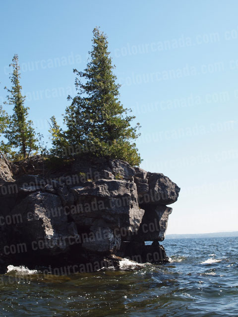 Trees on a Rock Cliff | Cheap Stock Photo