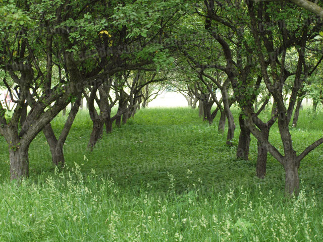 Trees Forming a Tunnel | Cheap Stock Photo