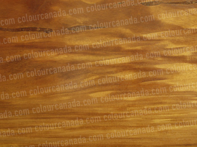 Wood Texture (1) | Cheap Stock Photo