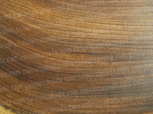 Wood Texture (25) | Cheap Stock Photo