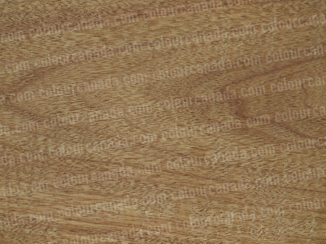 Wood Texture (27) | Cheap Stock Photo