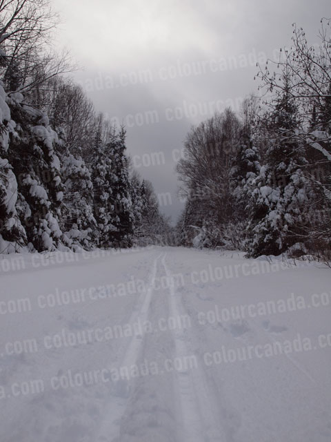 Cross Country Ski Trail (1) | Cheap Stock Photo